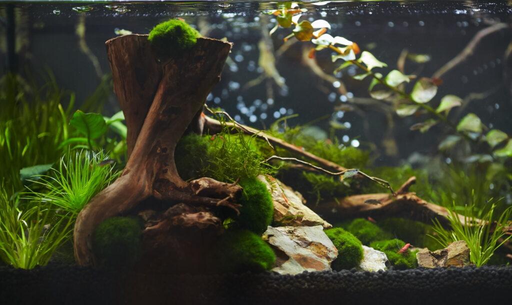 Aquarium für Redfire Garnelen