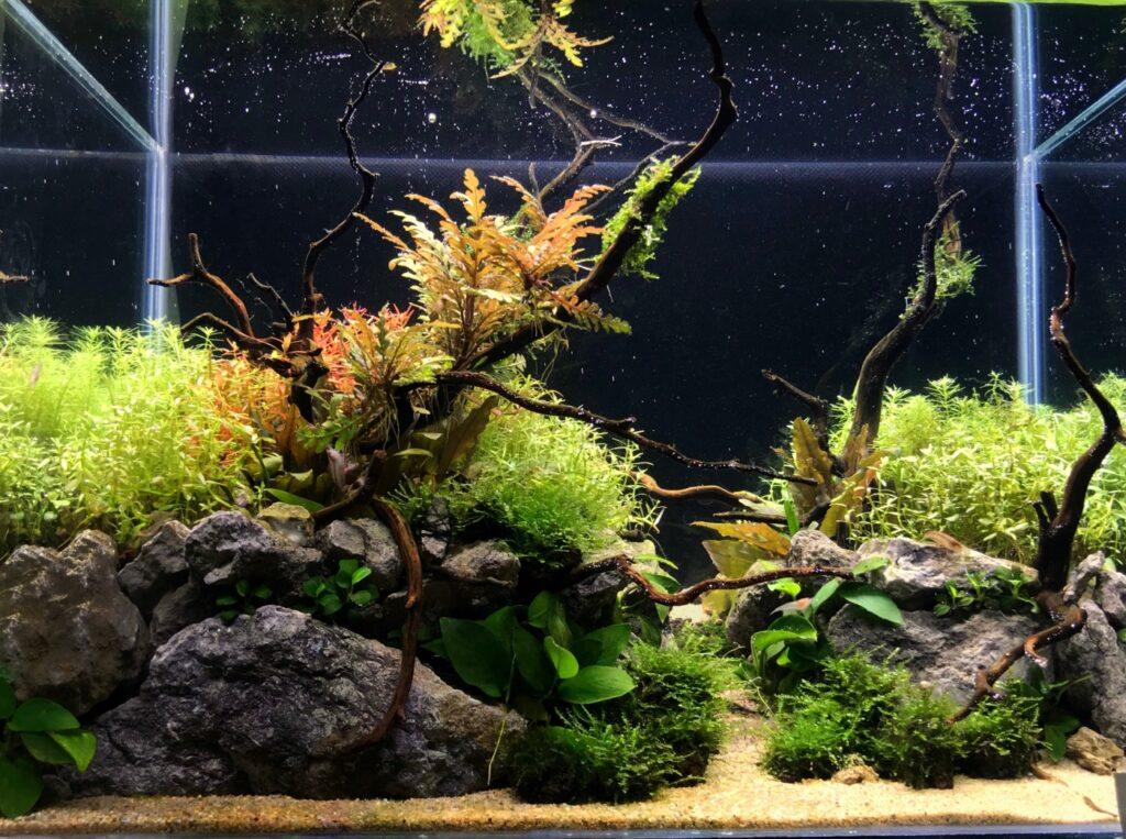 Aquarium für Amanogarnelen