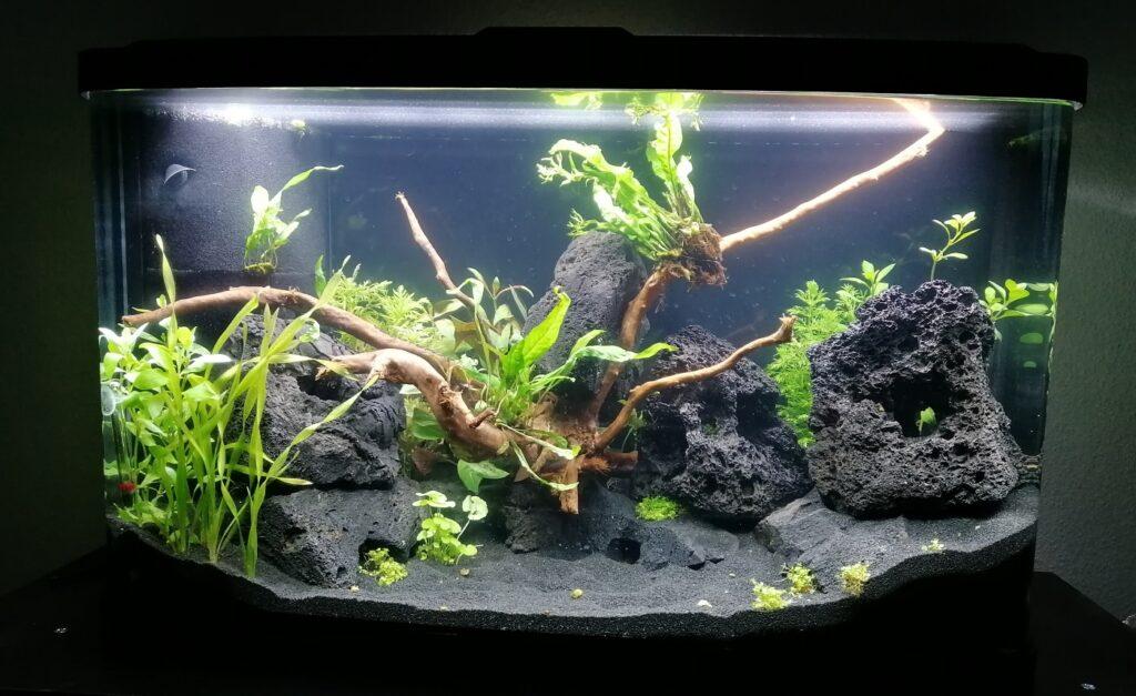 Aquarium direkt nach dem Einrichten