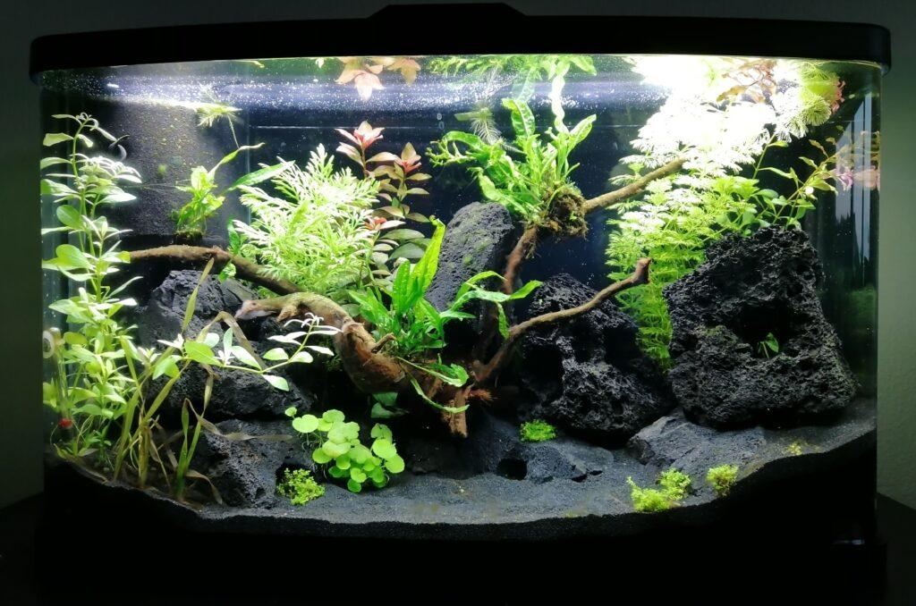 Aquarium einfahren - Nach 2 Wochen