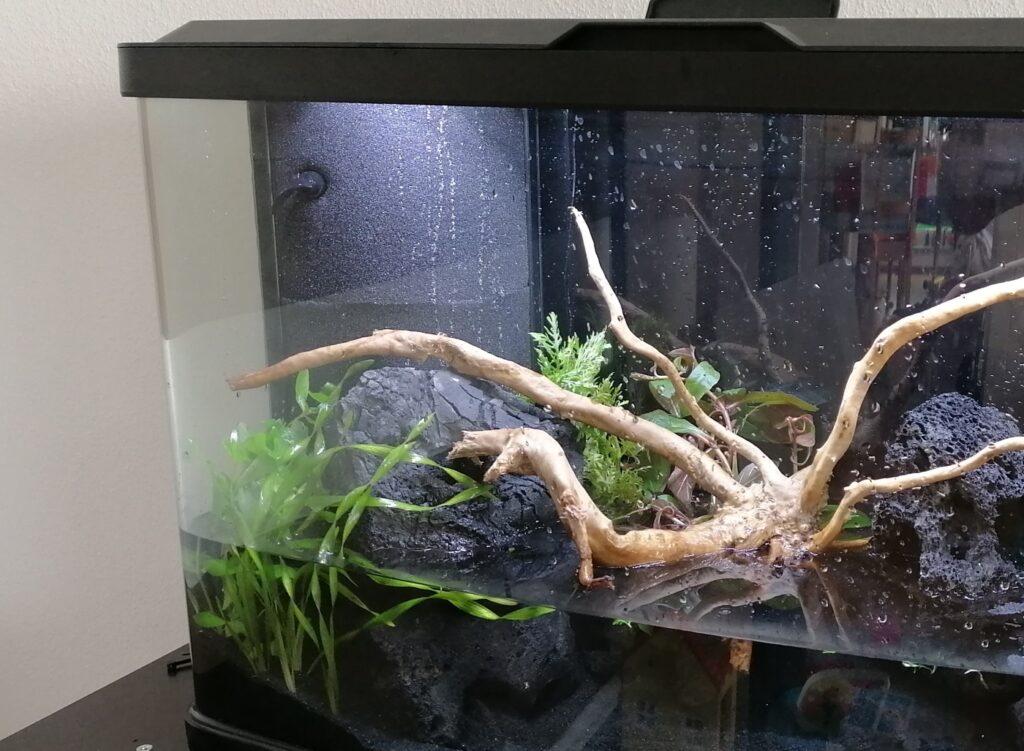 HMF im Aquarium